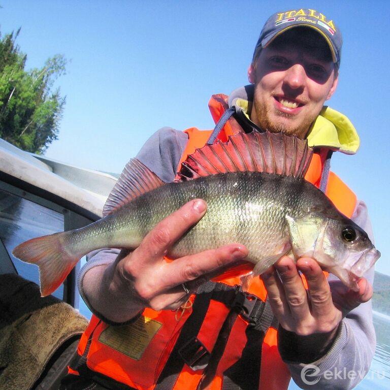 Какая рыба водится в Красноярске