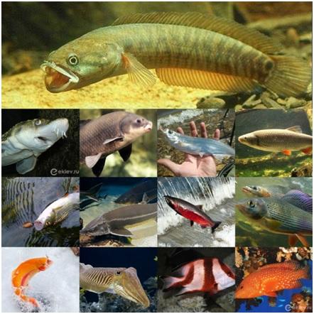 Ловля конкретных видов рыбы - специализированная рыбалка!